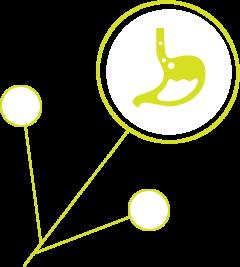 Digestion Issue   funksjonellmedisinsk